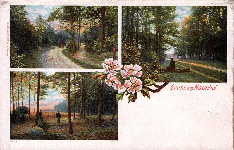 Das Naherholungsgebiet Naunhof, Postkarte um 1900 (Peter Fricke). Das Waldgebiet zwischen Naunhof und Lindhardt war vor allem bei Erholungssuchenden aus dem nahen Leipzig sehr beliebt.